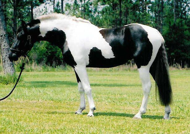 sport_horse