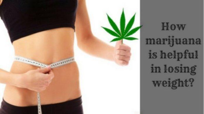 How marijuana is helpful in losing weight