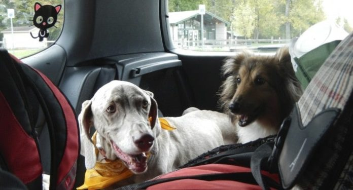 Prepare Your Dog for Travelling