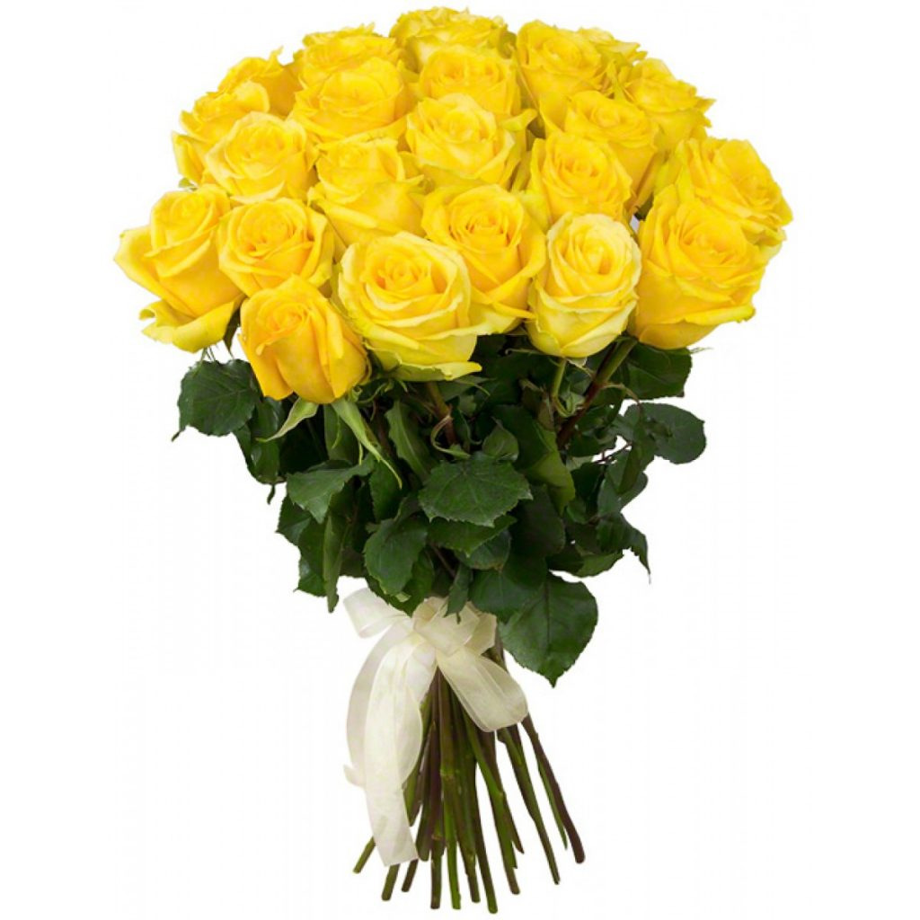 A yellow rose friendship