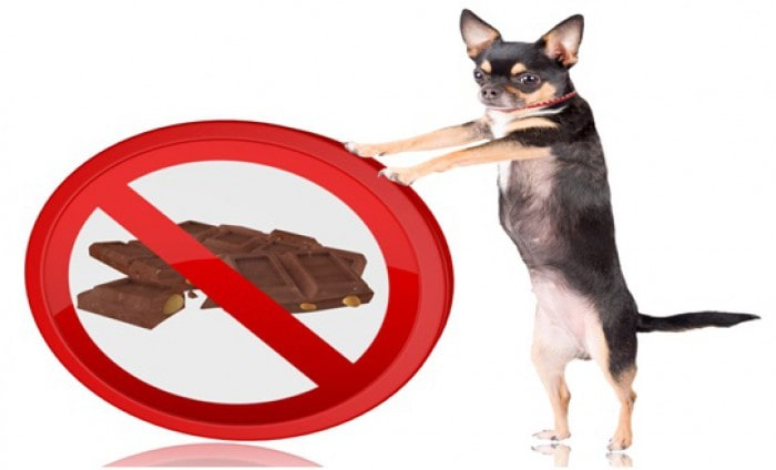 Human Foods That Are Injurious To Your Dog's Health
