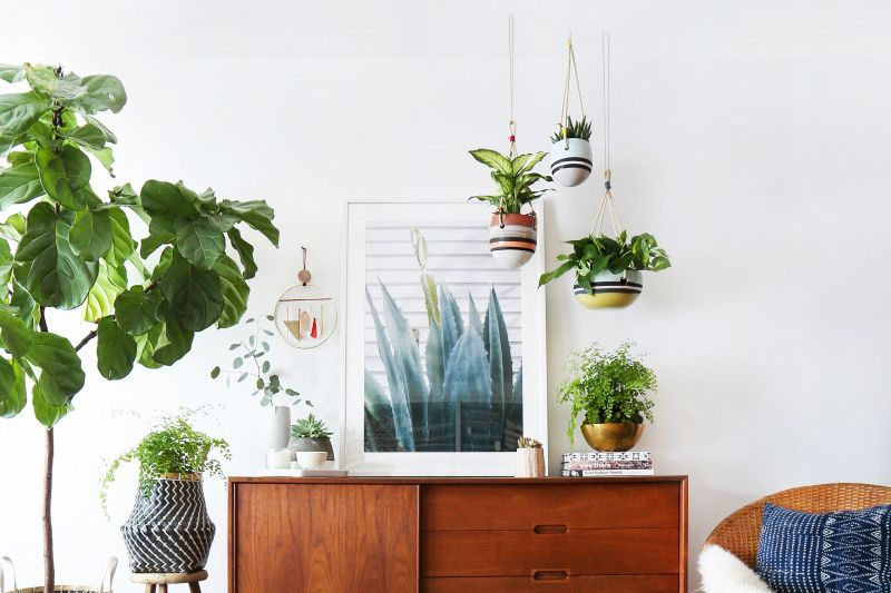 Add some greenery to the Living Room