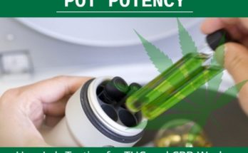 Pot Potency