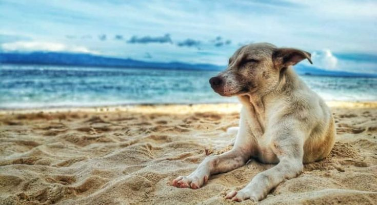Dog-Friendly Vacation Destinations