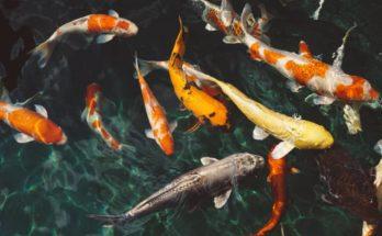 How to Control Fish Tank Algae