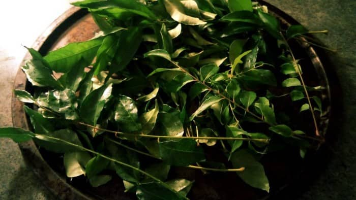 Curry Leaves To Treat Hair Loss