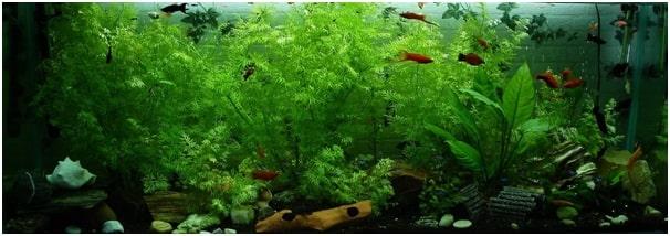 Quieter Aquarium Filter