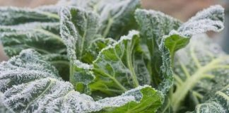 7 Tips to Protect Your Plants from Winter Burns