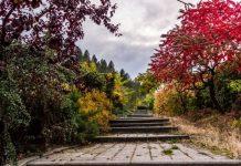 How to Create a Relaxing Outdoor Garden