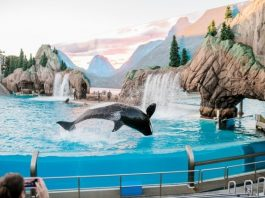 Things to Do and Enjoy in San Diego California