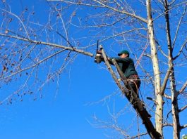 Tree Lopping expert