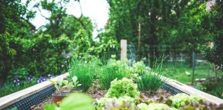 How to Start an Organic Vegetable Garden