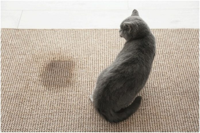 Cleaning Pet Stains from Carpets