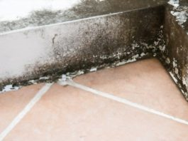 Preventing Mold in Basements