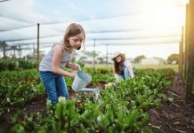 Vegetable Gardening for Beginners