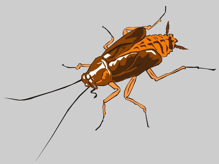 How to Get Rid of Termites: 5 Tips for First-Time Homebuyer's