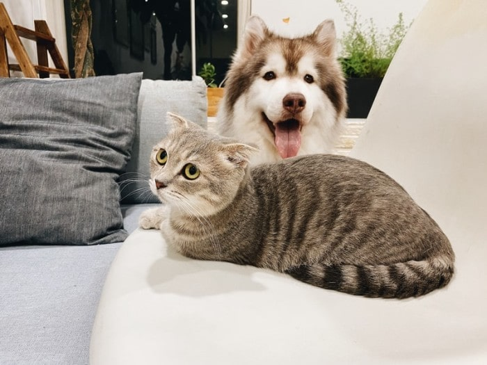 Dogs Vs. Cats: Which is a Better Choice for You?